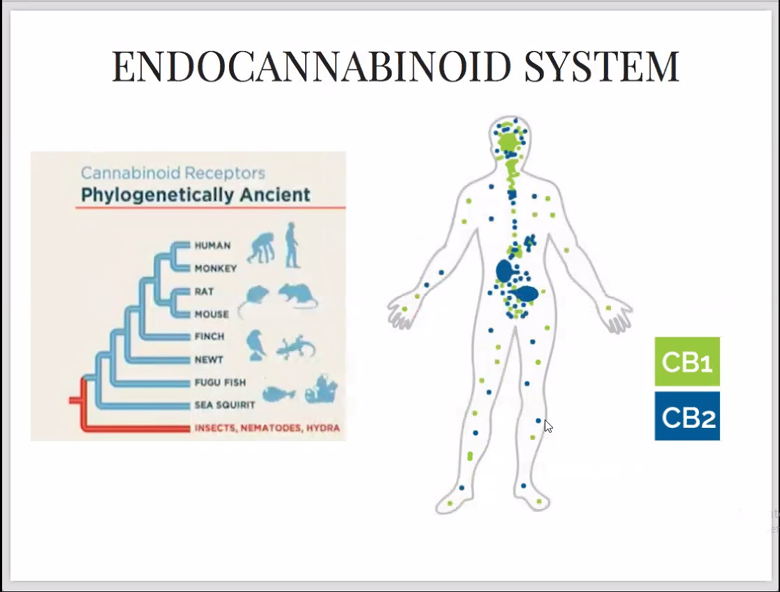 Endocannabinoid System Plant-Based Tincture